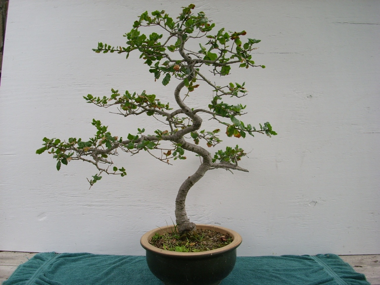 A New Technique For Bending Trunks And Branches